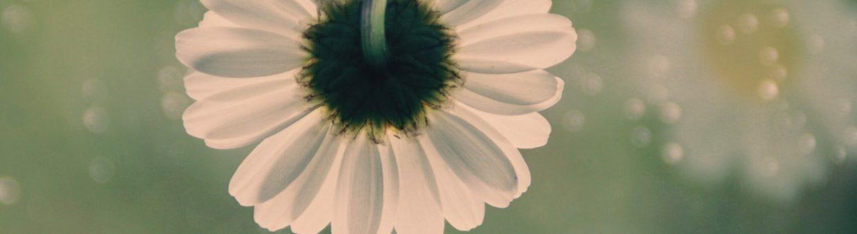 flower-5115850